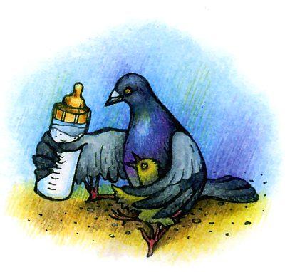 откуда берётся птичье молоко - фото