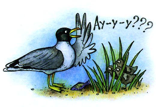 прикольные рисунки - чайка черноголовый хохотун