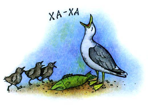 Серебристая чайка хохотунья - рисунок