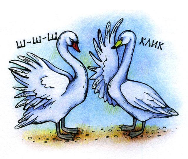 как различать лебедей