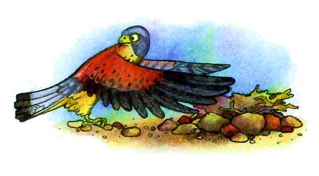 Гнездо сокола пустельга - рисунок