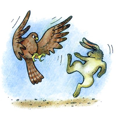 Зачем зайцу острые когти на лапах?