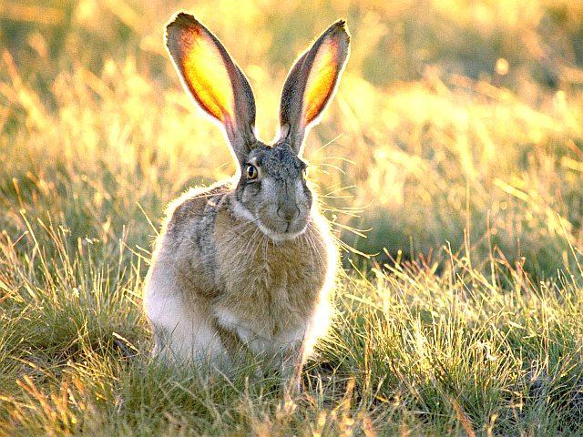 Фото зайца на поляне
