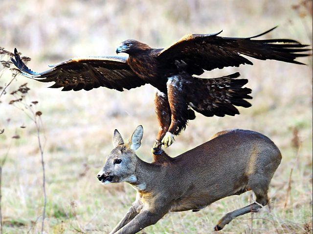 Самая большая хищная птица - фото