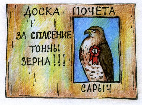птица сарыч канюк - смешные картинки
