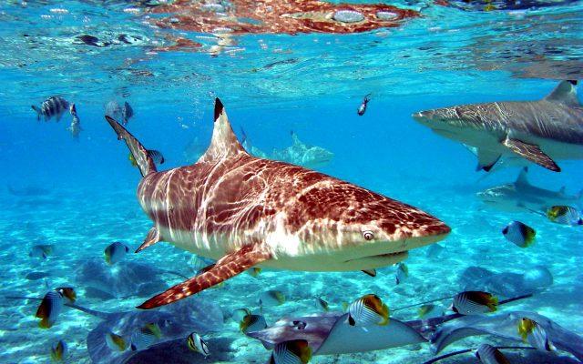 акула в море - фото