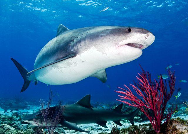 Почему акулы не живут в Черном море