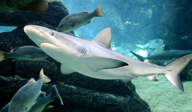 акула в море, фото