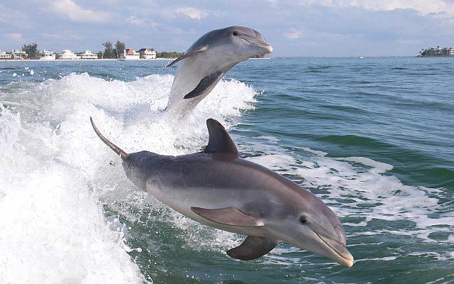 Черноморский дельфин - фото
