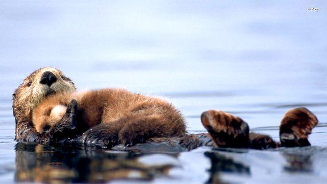 детям о животных выдры – фото