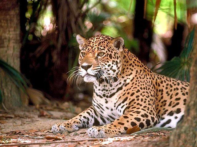 про леопарда детей - фото