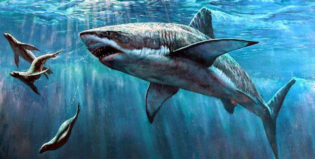Почему в черном море нет акул, а дельфины есть