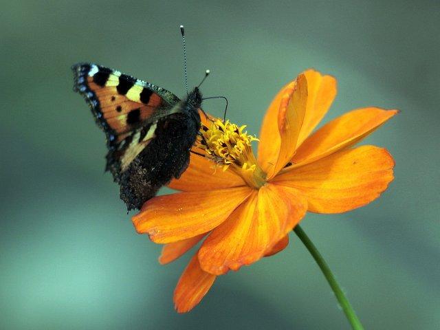 Бабочка на цветке - фото