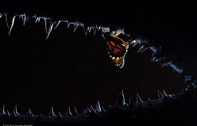 Бабочка в пасти крокодила - фото