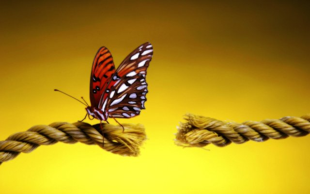 Бабочка на солнышке. Зачем бабочки греются на солнышке.