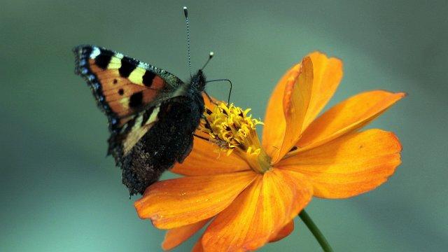 бабочка греются на солнышке - фото