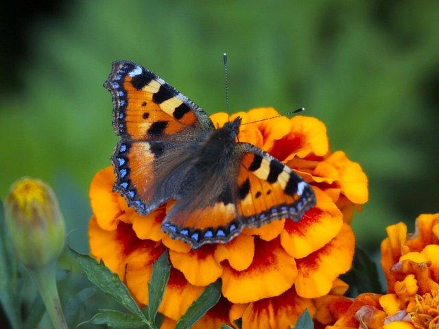 Бабочка на солнышке