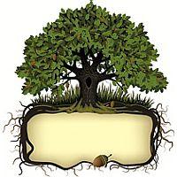 Про деревья дубы?