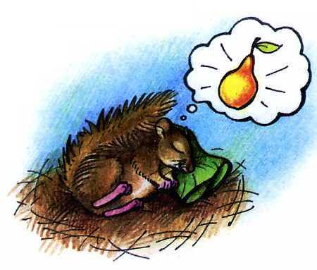 Пушистый зверек грызун по имени - соня