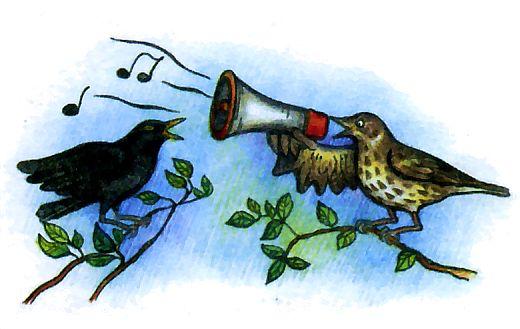 Как поют разные птицы - дрозд поет громче всех!