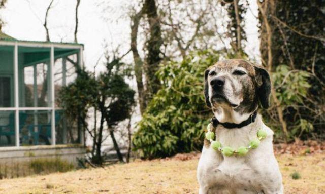 как собаки чувствуют страх - фото