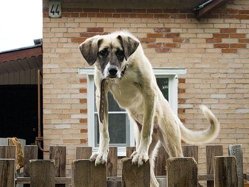 Как собаки чувствуют страх