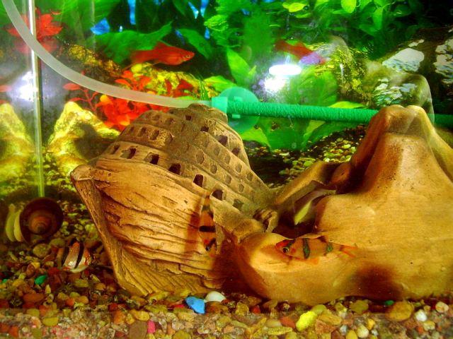 Помнят ли рыбки свой аквариум – фото.
