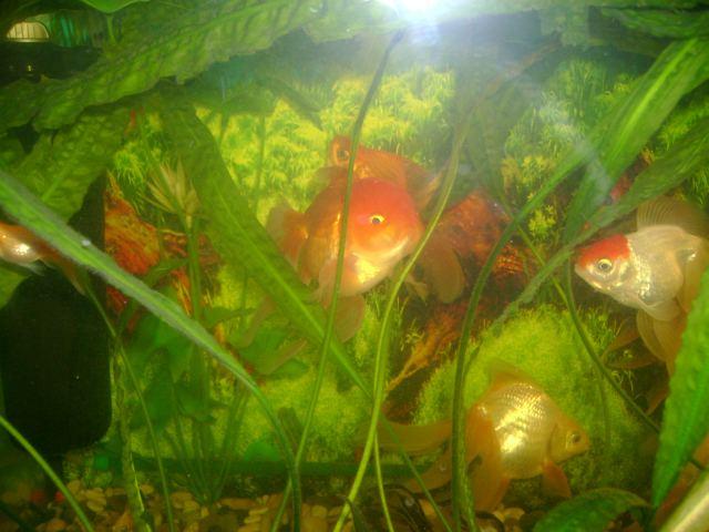 Память как у рыбки - фото