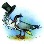 птичка крачка чеграва смешное фото