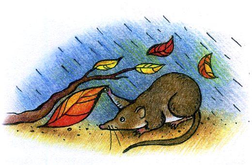 Кто живет под землей - забавное животное бурозубка