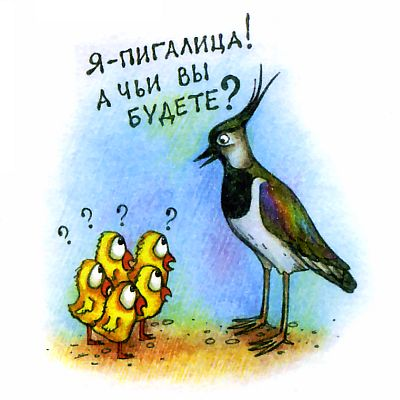 Птица отряда куликов. Что за птица кулик?