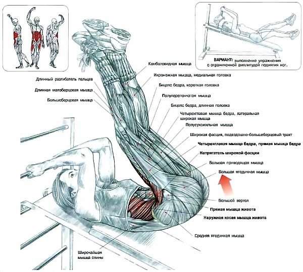 Правда, что сложно подсчитать количество мышц у человека