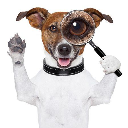 Отличительные особенности человека и животных