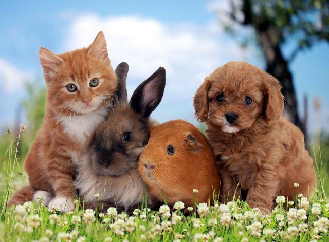 Отличительные особенности животных - фото