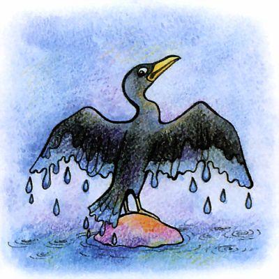 Почему бакланы любят стоять, раскрыв крылья?