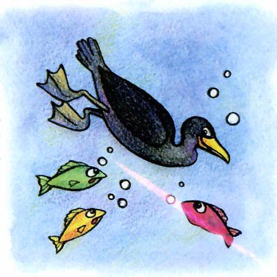 Бакланы птицы - рыболовы