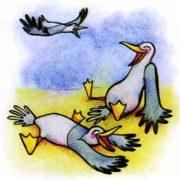 Почему чайку называют хохотунья