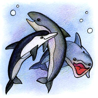 Какие киты водятся в Черном море? Правда, что дельфин - кит