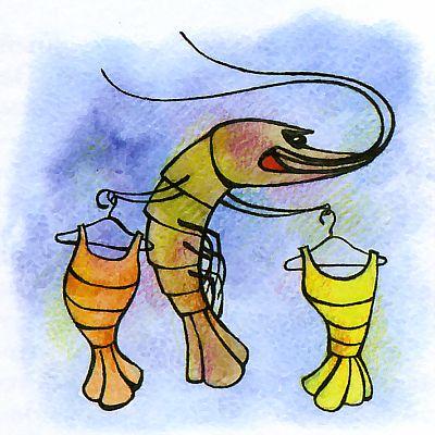 Как креветки становятся невидимками