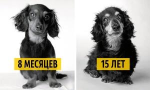 Как взрослеют собаки - фото