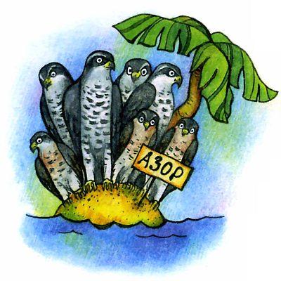 птица ястреб азорские острова - прикольные картинки