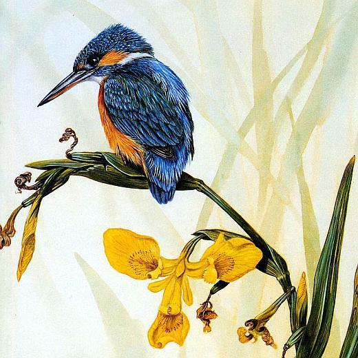 Картинка зимородок птица