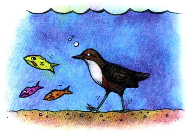 Какая птица ходит под водой