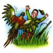 Болотные птицы, курочки