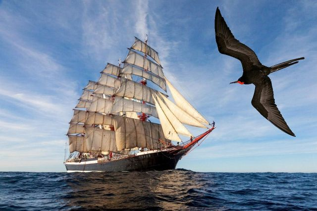 фрегат птица или корабль, фото