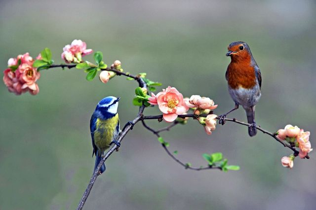 Птицы похожие на синицу