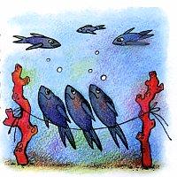 рыбы-ласточки