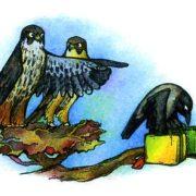 Самые быстрые хищные птицы — сокол чеглок