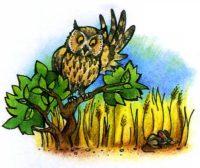 Ночные хищники совы и их уникальные способности