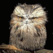 Кто из птиц впадает зимой в спячку?